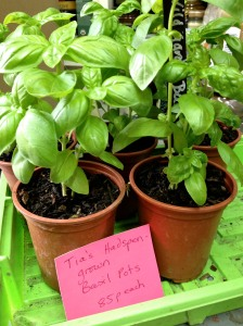 Plant it on and grow your own basil