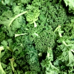 Curly green kale