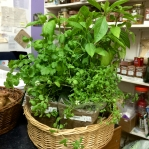 Marjoram and two sorts of basil